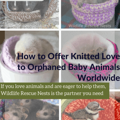 How to Offer Knitted Love to Orphaned Baby Animals Worldwide